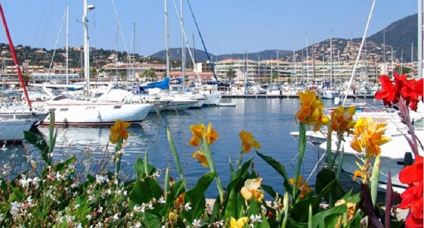 fleurs_et_port.png