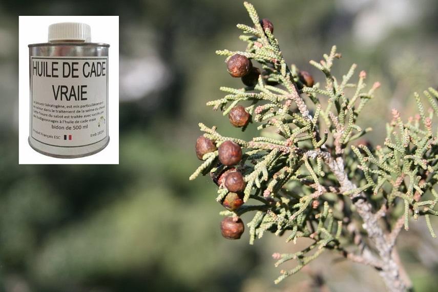 genevrier_juniperus_baies_violet-full-11756867.jpg